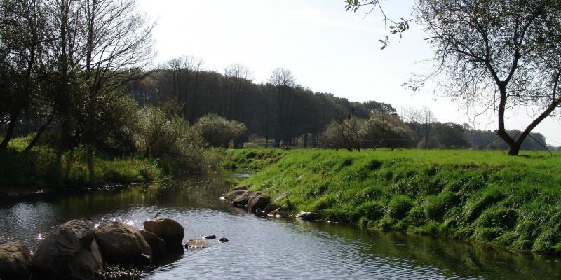 Idyllisches Flussufer in sanftem Licht