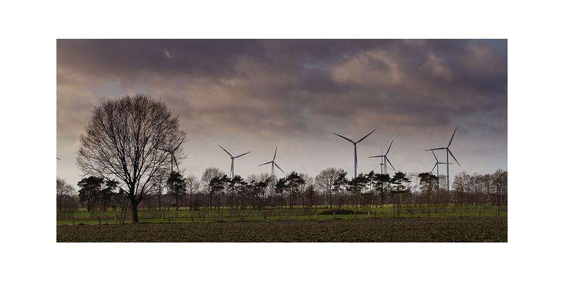 Felder mit Bäumen und einem Windpark