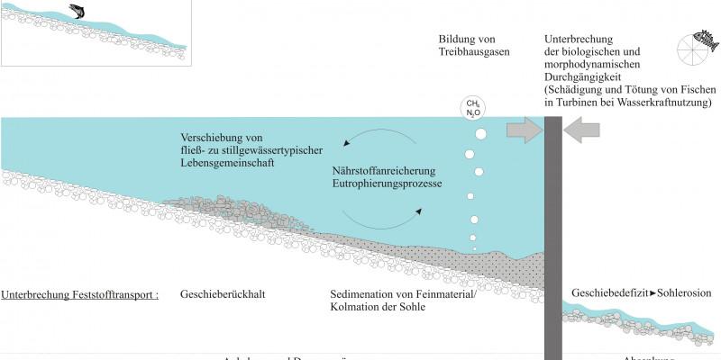 Die Umweltauswirkungen von Querbauwerken auf Fließgewässer werden grafisch erklärt. Es kommt zu Verschiebung der Lebensräume, Anreicherung von Nährstoffen, Sedimentation, Bildung von Treibhausgase, Geschiebedefizit, Unterbrechung des Feststofftransportes