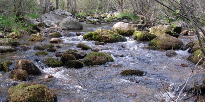 Breiter Bach, der recht schnell fließt. Im Bachbett liegen viele große runde Steine, die mit Moos bewachsen sind.