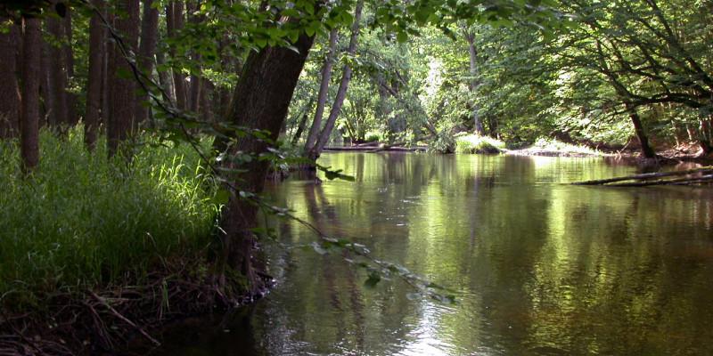 Ein breiter Flussabschnitt im Wald mit vielen hohen, grünen Laubbäumen am Ufer.