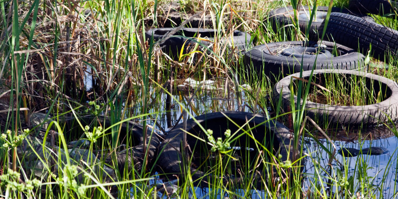 Old car tires into the reeds are between grasses in the water