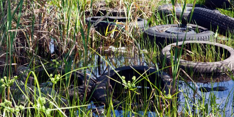 Alte Autoreifen liegen im Schilf, zwischen Gräsern im Wasser