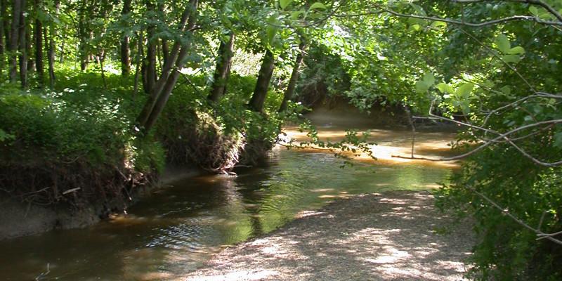 Kleiner Bach mit kleiner Sandbank und am Ufer stehen viele grüne Laubbäume