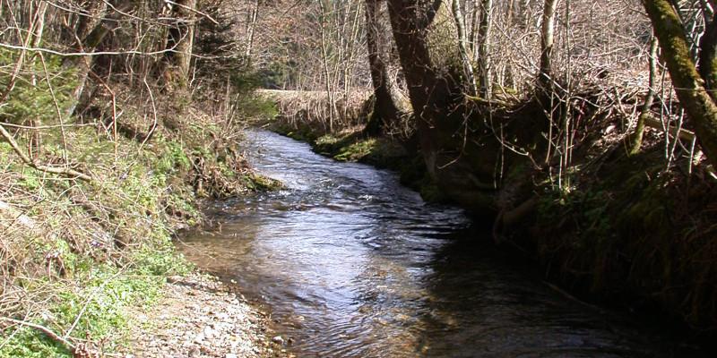 Kleiner Bach mit Kieseln im Flussbett.