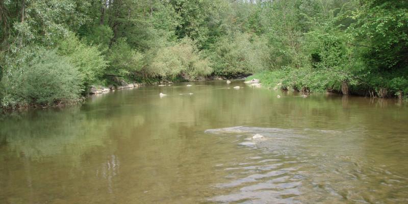 Sehr breiter und sehr ruhiger Fluss mit hohen, grünen Bäumen am Ufer.