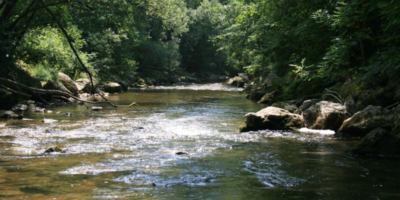 Rasch fließender Fluss über den sich grüne Bäume und Büsche beugen