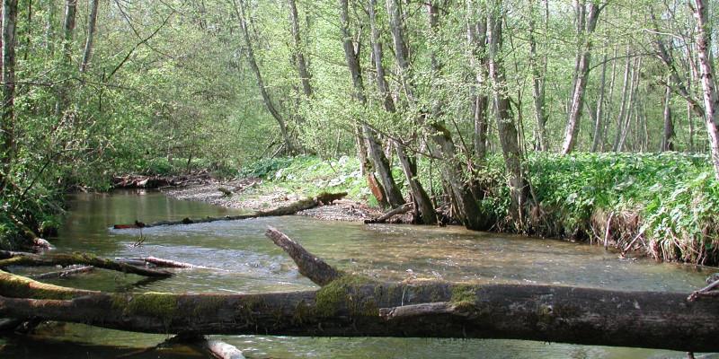 Breiter Fluss, in dem moosbewachsene Baumstämme liegen.