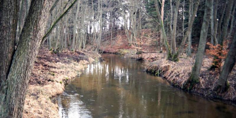 Flussansicht im Winter, mit kahlen Bäumen und das Gras ist gelb, braun.
