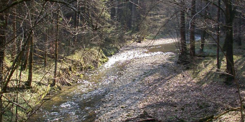 Kleiner Flusslauf, mit vielen Kieseln am und im Flussbett, der in einem Nadel- Laubwald fließt.