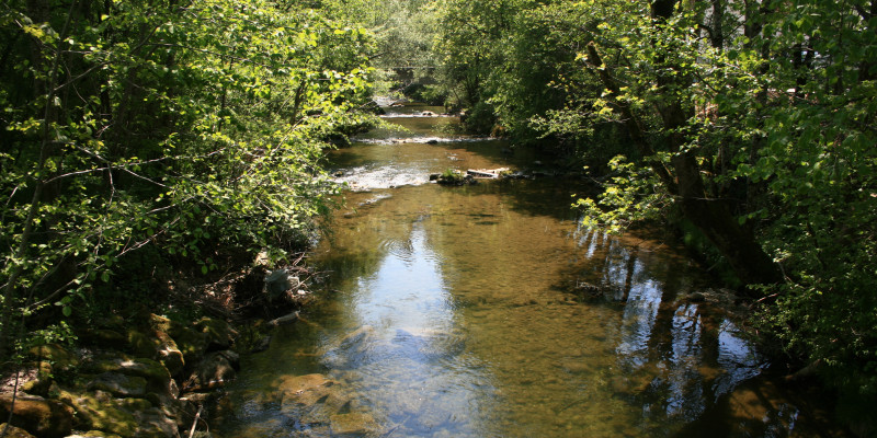 Blick auf einen Fluss mit rot-braunem, klarem Wasser und jungen Laubbäumen am Ufer.