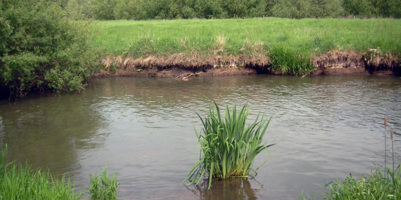 Ein brauner Fluss an dessen Ufer zu beiden Seiten eine Wiese ist