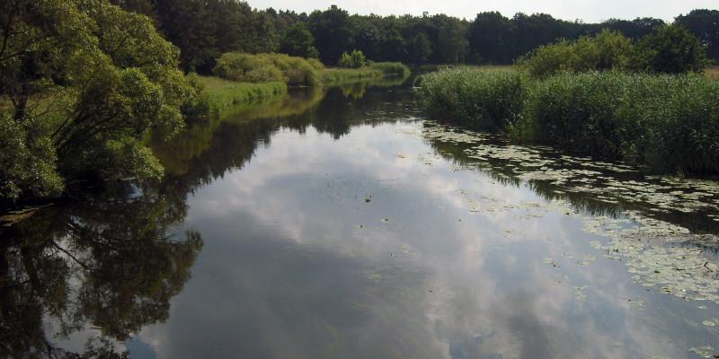 Blick auf auf den Flusslauf der Spree mit grüner Uferböschung rechts und links.