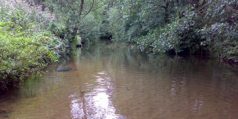 Ansicht eines Flusses mit braunem Wasser und hoher, dichten Büschen am Ufer.
