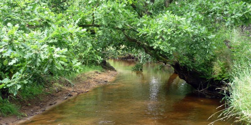 Kleiner Fluss mit klarem Wasser. Der Flussgrund ist schlammig und die Bäume am Ufer wachsen über den Fluss.