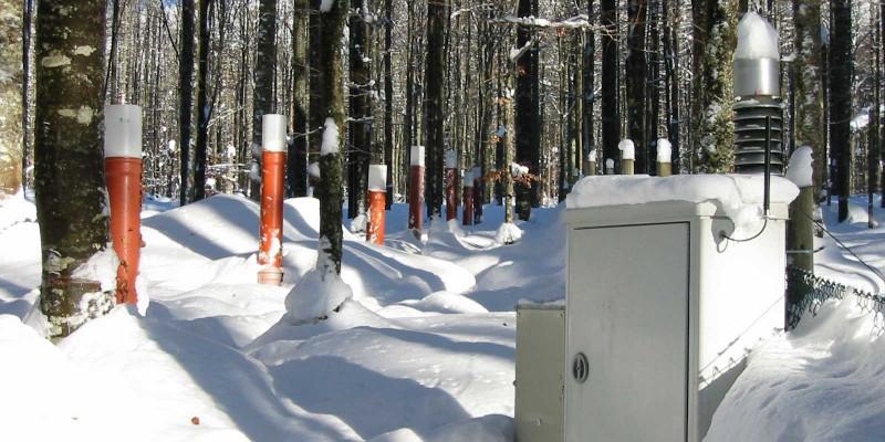 Forellenbach Beech in winter