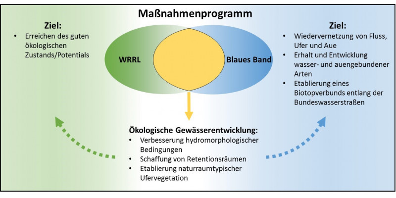 """Ein Schaubild mit dem Titel """"Maßnahmenprogramm"""". Zu sehen sind zwei sich überschreitende Kreise. Diese sind mit """"WRRL"""" und """"Blaues Band"""" betitelt. Neben den Kreisen sind Ziele beschrieben. Neben dem Kreis """"WRRL"""" steht: """"Ziel: Erreichen des guten ökologischen Potentials/Zustandes"""", neben dem Kreis """"Blaues Band"""" steht: """"Ziel: Wiedervernetzung von Fluss, Ufer und Aue. Erhalt und Entwicklung wasser- und auengebundener Arten. Etablierunge eines Biotopverbunds entlang der Bundeswasserstraßen""""."""