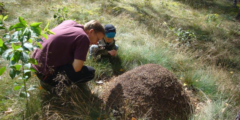 Ameisenhaufen im Wald