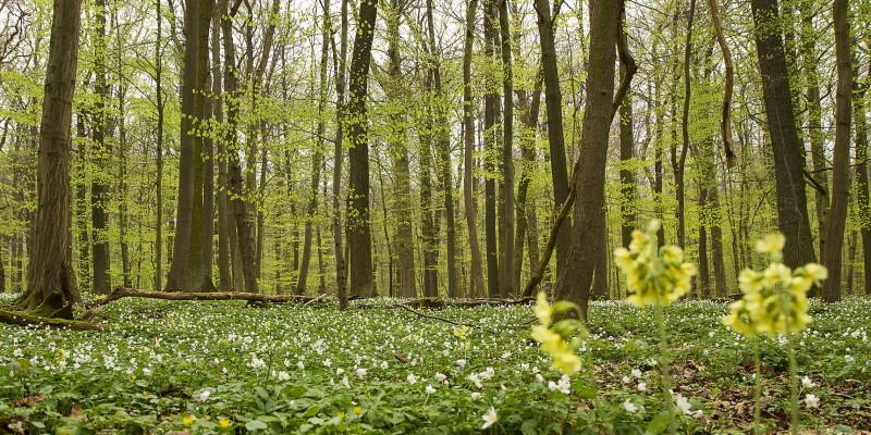 Ein Wald im Frühling.