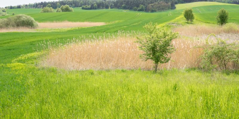 Ein Feld mit Gräsern und Blüten