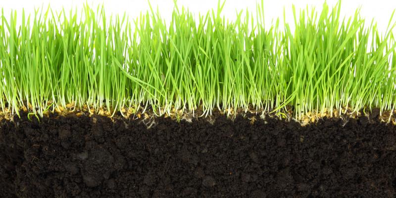 Unten ist dunkler Mutterboden, oben wächst Rasen.