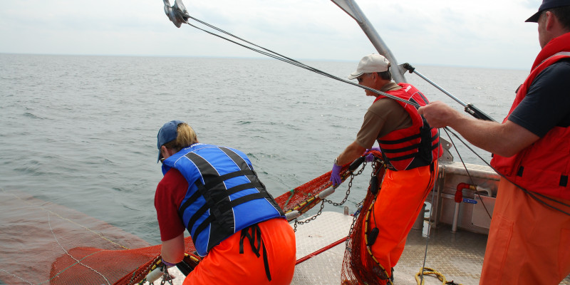 Sampling fish at Canada's National Aquatic Biological Specimen Bank using nets