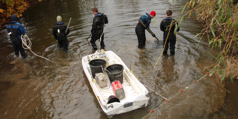 Fish sampling at the British National Fish Tissue Archive (UK Centre for Hydrology and Ecology)