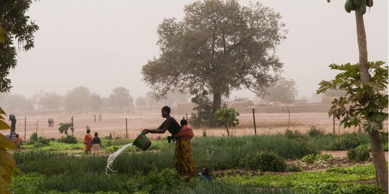 Eine Frau kippt einen Eimer Wasser über einen Gemüsegarten.
