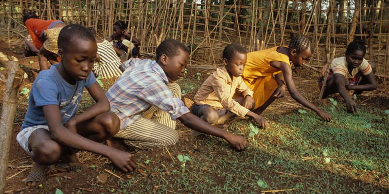 Kinder ernten im Gemüsegarten.