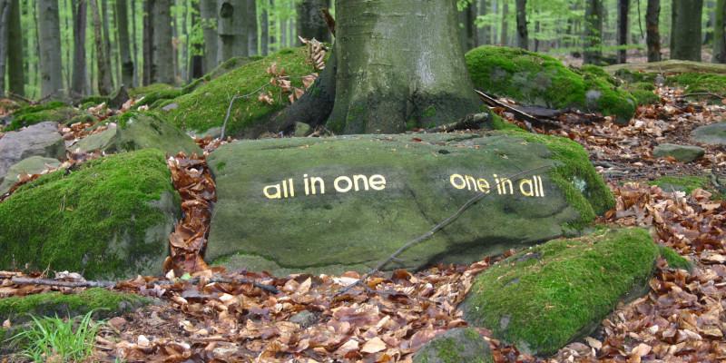 """Aufgebrachte Schriftzüge im Wald: """"all in one"""" und """"one in all"""""""