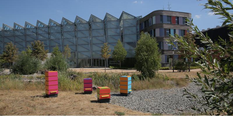Foto der bunten Bienenkästen auf dem Gelände des UBA in Dessau