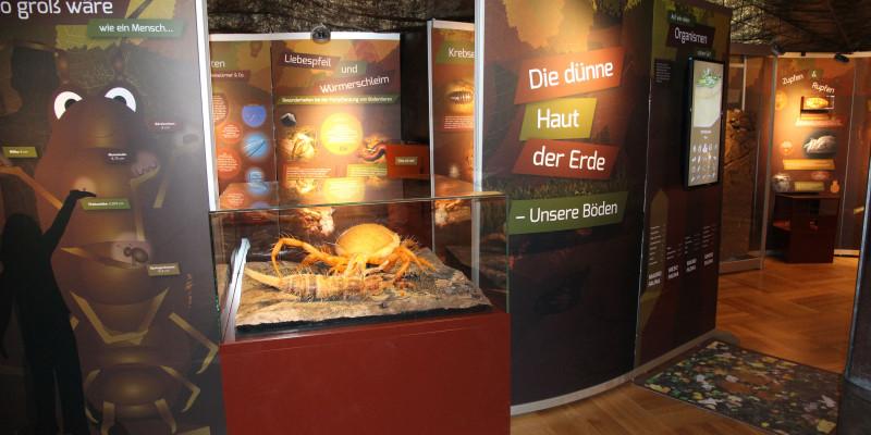 Schautafeln und Exponate am Eingang