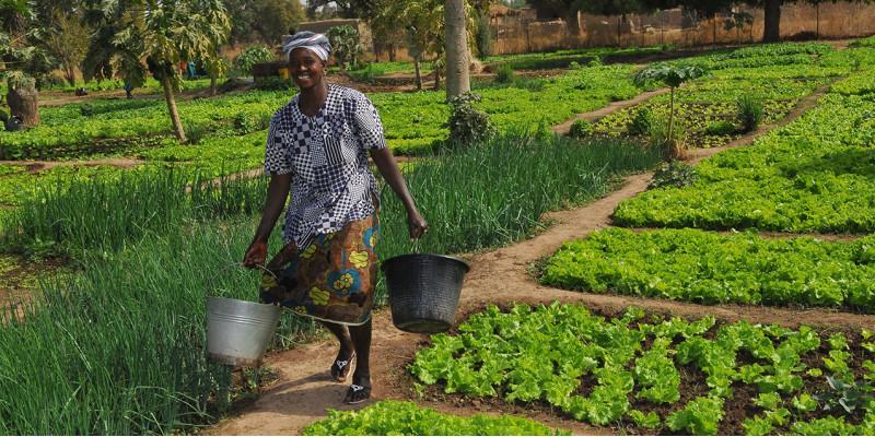 Eine Frau mit zwei Eimern läuft durch einen grünen Gemüsegarten.