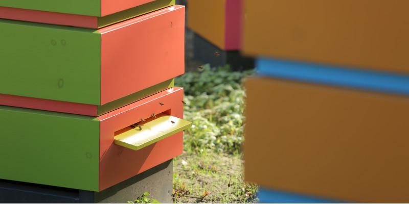Nahaufnahme eines bunten Bienenkastens inkl. Bienen