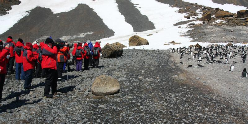 Auf der linken Seite des Bildes steht eine Gruppe von Menschen in roten Kälteschutzanzügen. Sie halten ausreichend Abstand zu einer Gruppe Pinguine auf der rechten Seite.