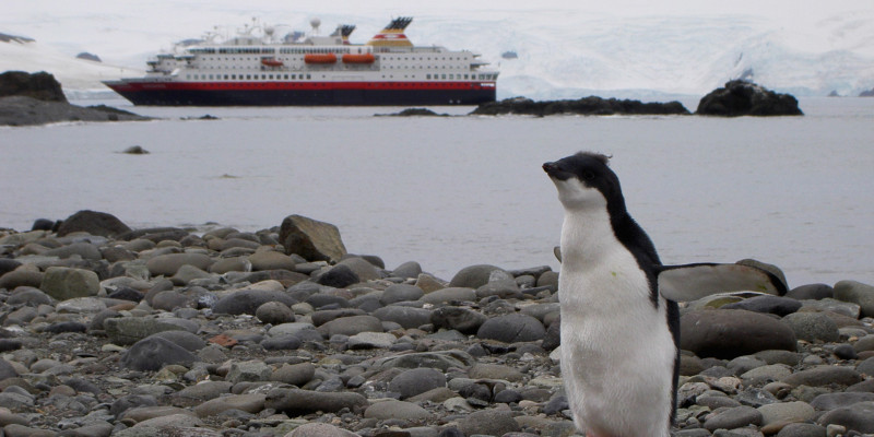 Penguins are one of the reasons to travel to Antarctica.