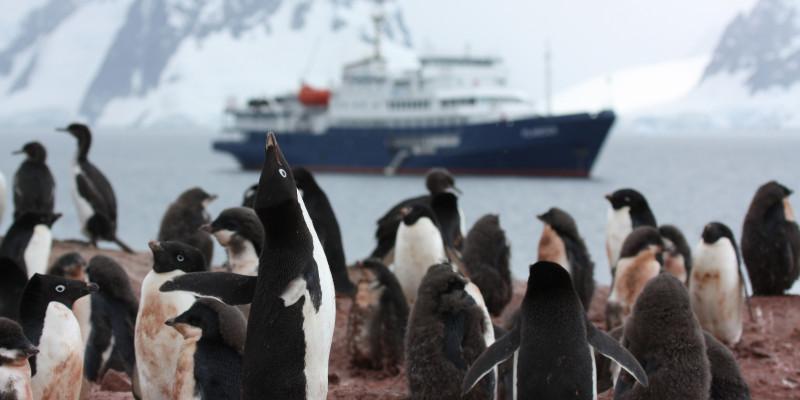 Sehr nah sieht man eine Gruppe von Pinguinen auf einem steinigen Küstenabschnitt stehen. Im Hintergrund fährt ein Schiff vorbei.
