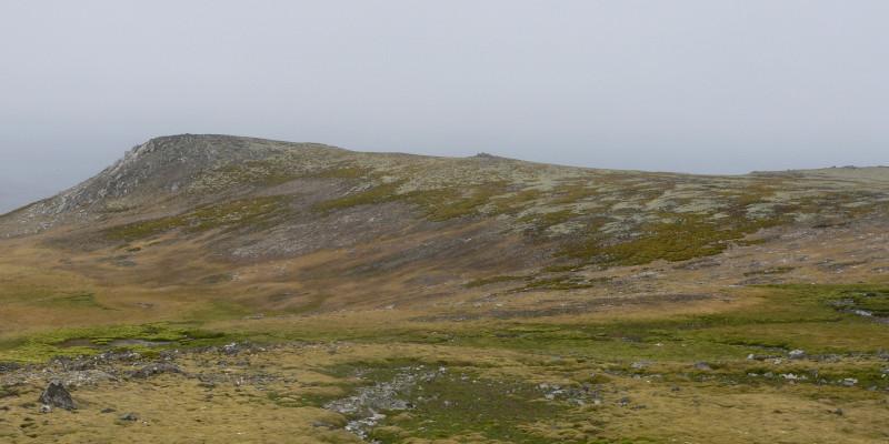 Auf einer weiten steinigen Fläche wächst dicht grün-braunes Moos und Flechten. Es ist kein Eis zu sehen. Der Himmel ist düster.