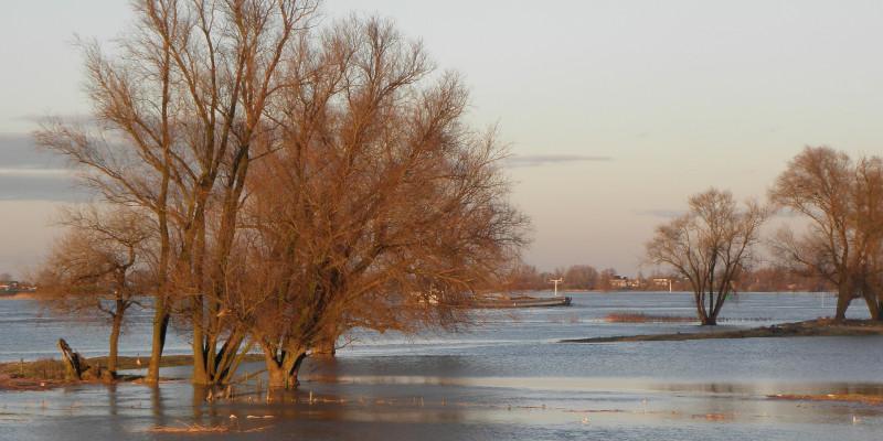 Überflutungen setzen den Lebensraum vieler Tiere unter Wasser.