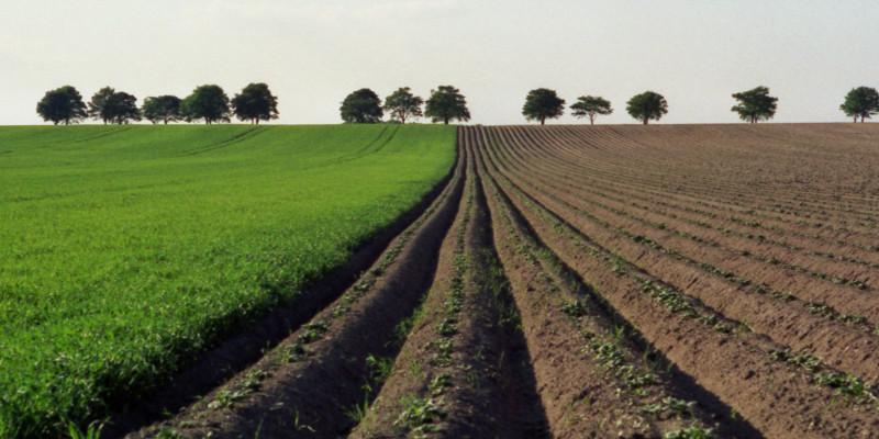 Acker, der teils begrünt, teils frisch angebaut wurde. Die Furchen auf dem frisch bepflanzten Acker sind tief. Am Horizont sind vereinzelte Laubbäume und Himmel zu sehen.