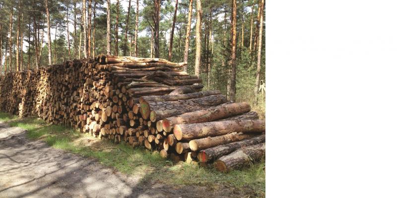 Das Bild zeigt ein Holzlager entlang eines Waldweges.
