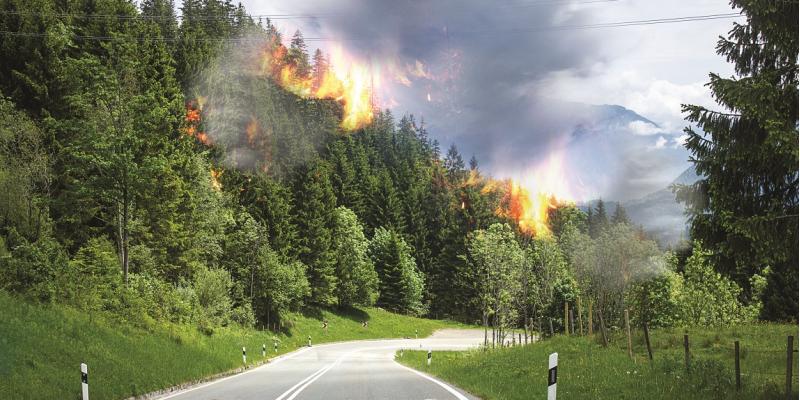 Das Bild zeigt eine Straße, die an einem Waldrand entlangführt. Aus dem Wald schießen Flammen empor, und es ziehen große Rauchwolken in den Himmel.