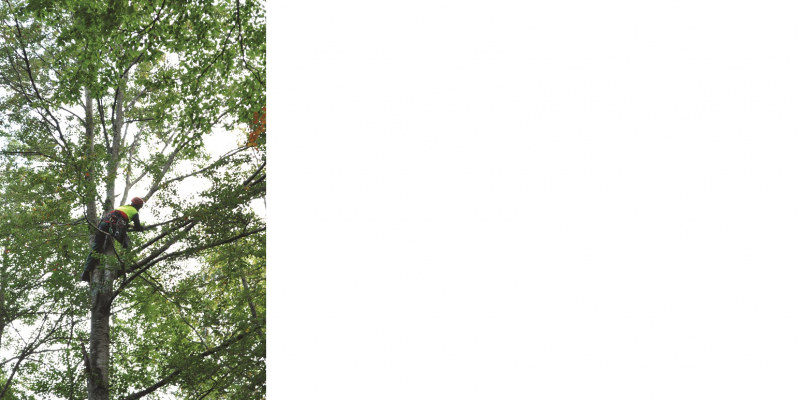 The picture shows a tree climber working high up in the crown of a deciduous tree.