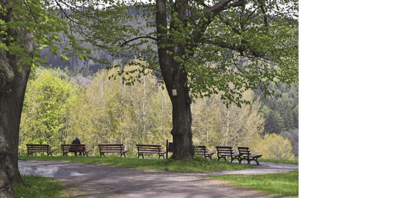 Das Bild zeigt einen von hohen Bäumen gesäumten Weg, an dessen Rand Sitzbänke stehen. Ein Mensch sitzt auf einer der Bänke und blickt in die sich angrenzende Waldlandschaft.