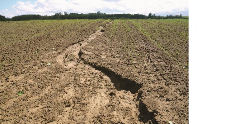Das Bild zeigt einen Acker mit Jungpflanzen. Durch das Feld zieht sich eine große vegetationslose Erosionsrinne.