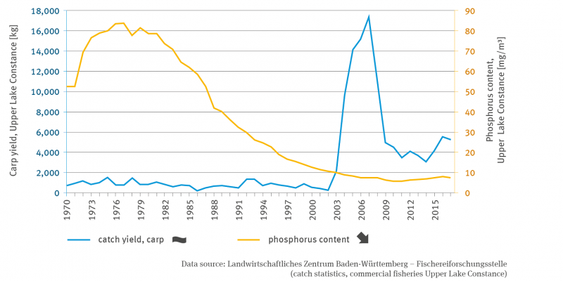The line graph shows the development of the phosphorus content in Lake Constance in milligrams per cubic metre from 1970 to 2017. There is no trend.
