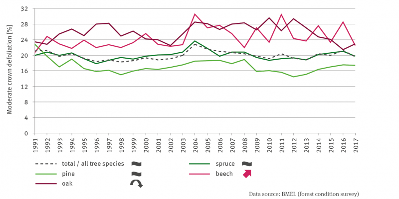 A line graph shows the mean crown defoliation in percent for the total forest and the tree species spruce, pine, beech and oak for the period 1991 to 2017. For beech there is a significant increasing trend, for oak it is quadratically decreasing. There is no trend for the other tree species and the total forest.
