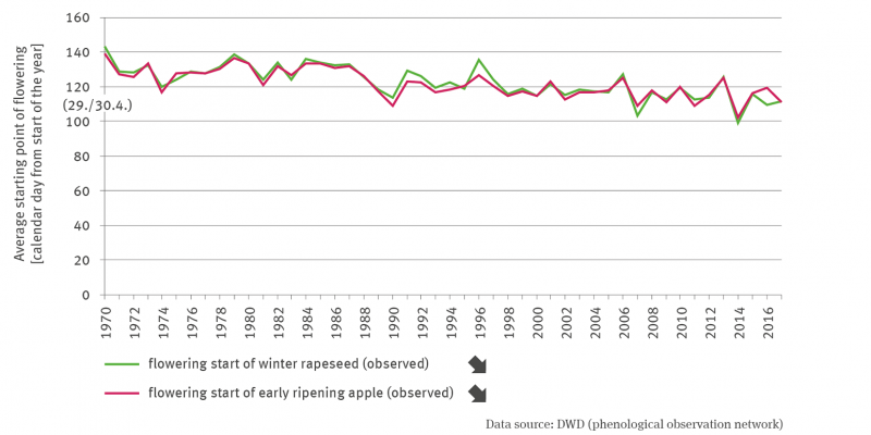 The line graph shows the development of the observed mean time of the beginning of flowering of winter rape and of early ripening apple as a calendar day from the beginning of the year. Both time series between 1970 and 2017 show a significantly decreasing trend with annual fluctuations. The lines are very close to each other, partly also on top of each other.