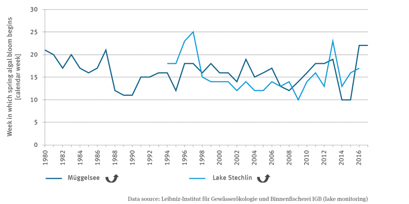 The line graph shows the calendar week of the onset of the spring algal bloom in Lake Müggel since 1980 and in Lake Stechlin since 1994. Both graphs show a quadratically increasing trend with fluctuations between years.