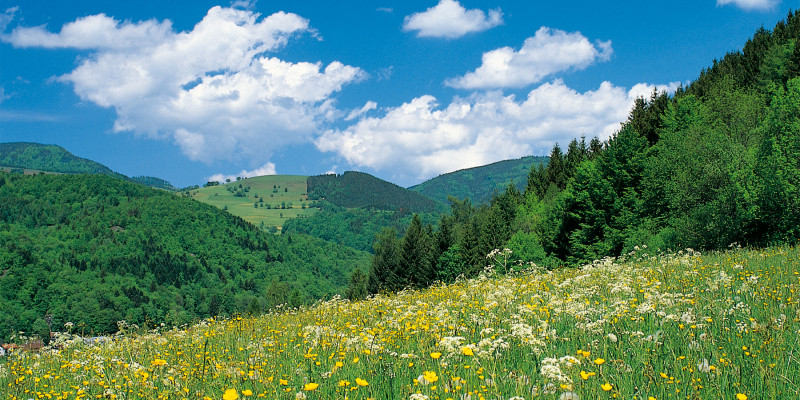 Hilly terrain with fields and forests